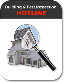 Building and Pest Inspection Hotline